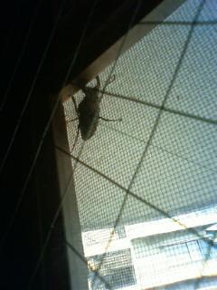 部屋の窓にクワガタが飛来し、ツキを運ぶ?