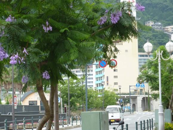ホウオウボク、カエンボクと並んで世界3大花木の一つ