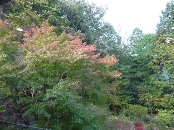 特別室から紅葉を観る